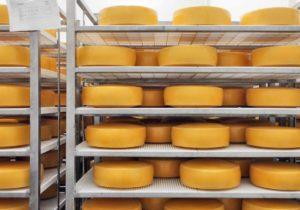 LatvijasPiens-06-siers